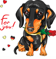 cute dog breed dachshund with red flower vector image vector image