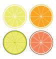 lime lemon grapefruit and orange slices vector image