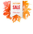 sale emblem over background with autumn leaves vector image