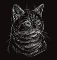 black cat portrait 7 vector image vector image