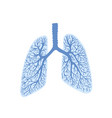 lungs - part human body respiratory organ vector image