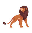 proud powerful lion mammal wild cat jungle animal vector image vector image