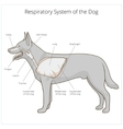 Respiratory system of the dog vector image vector image