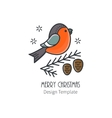 Bullfinch on a spruce branch vector image