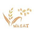 cereal grains wheat vector image vector image