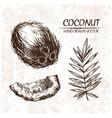 digital detailed coconut hand drawn vector image vector image