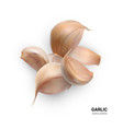 realistic garlic isolated vector image vector image