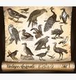 vintage animals birds vector image