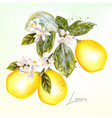 botanical with lemon and flowers vector image