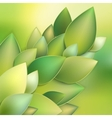 Green leaves abstract EPS 10 vector image