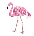 hand drawn realistic flamingo vector image