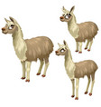 maturation stages lama three stages growth vector image