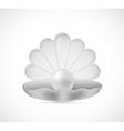 Shell pearl cartoon vector image vector image