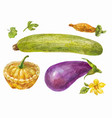 vegetables painted in watercolor zucchini vector image vector image