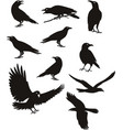crow silhouette black color vector image