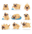 cute funny pug dog set dog in different poses and vector image vector image