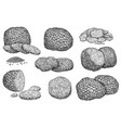 hand drawn truffle sketch set isolated on white vector image