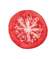 slice of tomato vector image vector image