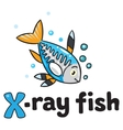 X-ray fish for ABC Alphabet X vector image