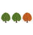 oak trees set vector image