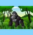cartoon gorilla in the thick rain forest vector image vector image