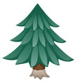 cartoon spruce isolated on white background vector image vector image