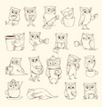 owls with cup sleep concept birds characters vector image