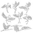 set black and white japanese cranes vector image