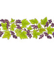 black currant pattern vector image vector image