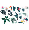 jungle leaves and flowers set isolated vector image