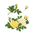 set of yellow and white roses bouquets flowers vector image vector image