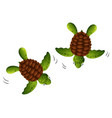 two baby turtles white background vector image