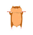 cute cartoon hamster character hanging on a stick vector image vector image