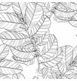 seamless pattern with coffee plant vector image vector image