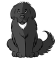 big fluffy dog vector image