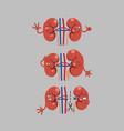 kidney cartoon character vector image vector image