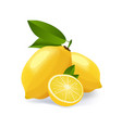 lemon cut emblem isolated on vector image