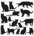 russian blue cat silhouettes vector image vector image