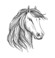 Arabian mare horse head isolated sketch vector image vector image