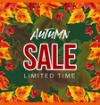 bright banner with autumn sale promo vector image