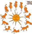 cat doing yoga position surya namaskara vector image vector image