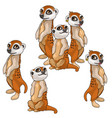 funny family of meerkats animals isolated vector image vector image