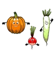 Radish turnip and pumpkin vegetables vector image vector image