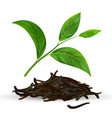 fresh and dry green tea leaves vector image vector image