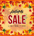 bright template of autumn sale advertisement vector image vector image