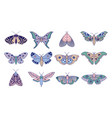 colorful moths and butterflies vector image vector image
