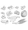 Nuts grain pencil sketch icons on blackboard vector image vector image