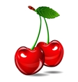 Cherry berry isolate on white background vector image