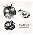 digital detailed tomatoes hand drawn vector image vector image