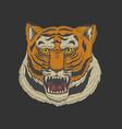 Head of wild animal predator asian tiger face